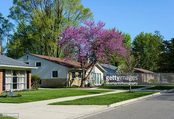 Middle Class American Neigborhood in Spring
