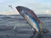 Middle of sea big yellow fin tuna jumping to catch flying fishes 3d Render