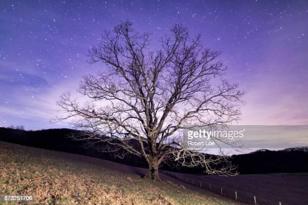 Midnight Tree Hugger