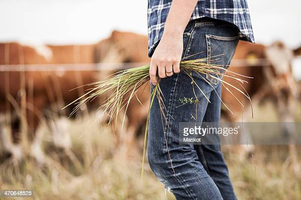 Midsection of farmer holding grass on field