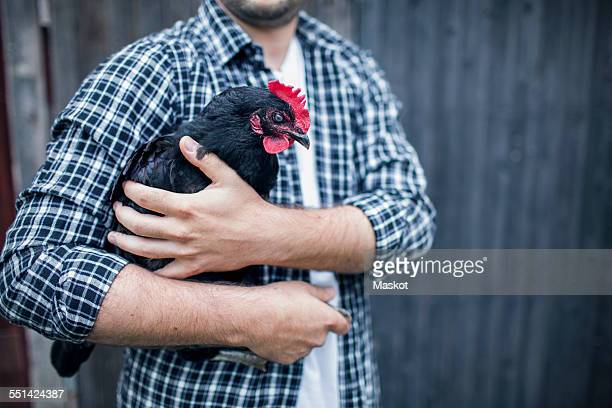 Midsection of man carrying hen at poultry farm