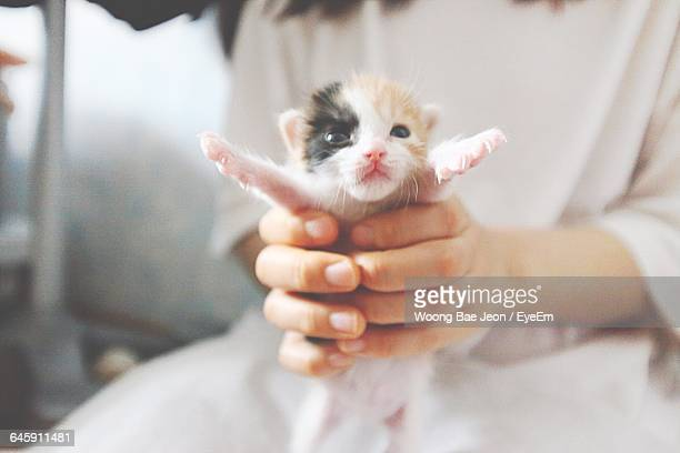 Midsection Of Owner Holding Kitten