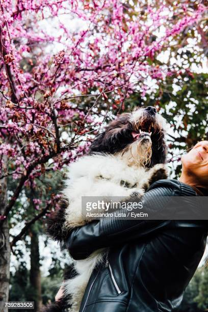 Midsection Of Young Woman Carrying Dog By Pink Flowering Tree