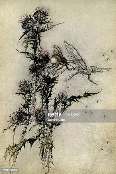 A Midsummer Night's Dream Illustration by Arthur Rackham to the play by William Shakespeare Act 4 scene 1 Cobweb 'Kill me a redhipped humblebee on...