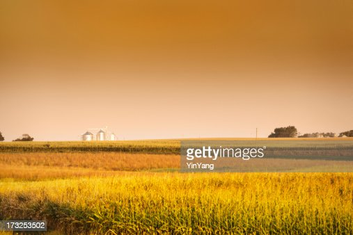 Midwest Corn Field and Grain Bin Silo at Harvest
