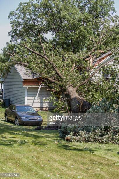 mighty oak falls on house vert