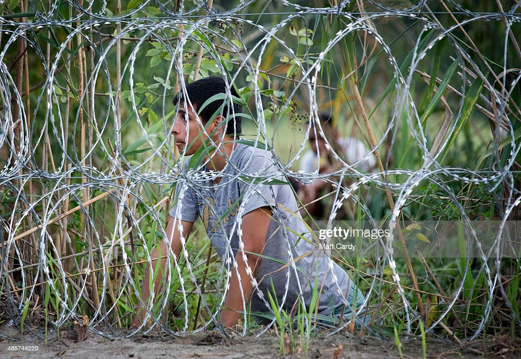 A migrant looks from behind the fence as plans to cross the border from Serbia into Hungary undetected close to the village of Roszke on August 29...