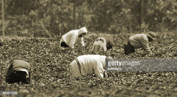 Migrant Workers in the field