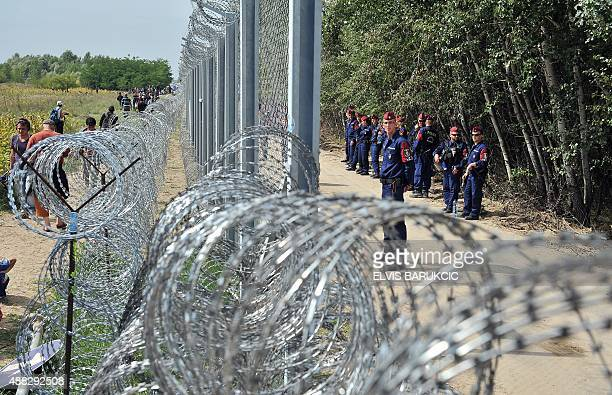 Migrants and refugees walk near razorwire along a 3meterhigh fence secured by Hungarian police at the official border crossing between Serbia and...