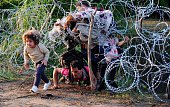 A migrant's family creeps under a barbed fence near the village of Roszke at the HungarianSerbian border on August 27 2015 As Hungary scrambles to...
