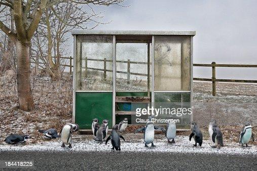 migrating birds : Stock Photo