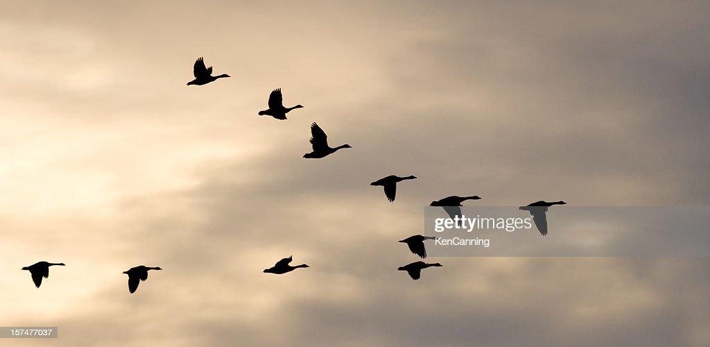 Migrating Flock and Winter Sky
