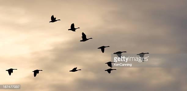 Tierwanderung Flock und Winter Sky