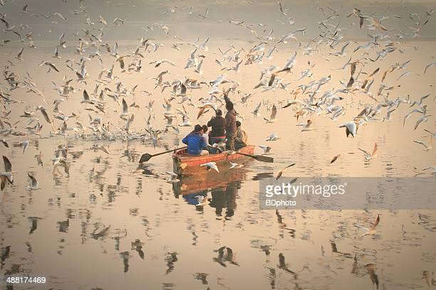 Migratory birds in New Delhi