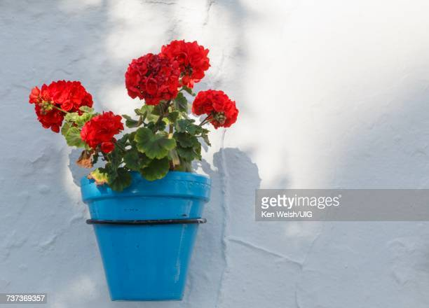 Mijas, Costa del Sol, Spain. Flowerpot.