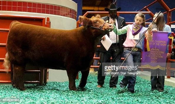 Mikala Grady of Grandview Texas shows her steer during auction at the Fort Worth Stock Show and Rodeo Saturday Feb 4 in Fort Worth Texas The Women...