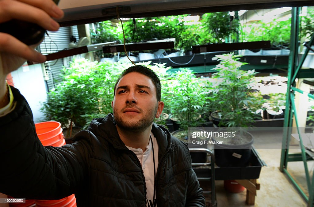 Mike Goldstein of New York, NY photographs himself with plants at La Conte's grow facility during a marijuana tour hosted by My 420 Tours in Denver, CO on December 06, 2014. During the day tourists visited La Conte's grow facility, La Conte's Clone Bar & Dispensary, Native Roots dispensary and Illuzions Glass Gallery.