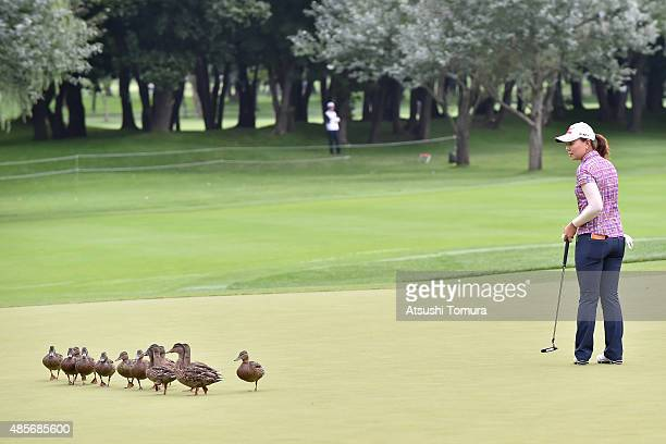 Miki Uehara of Japan watches ducks walking through the 1st green during the second round of the Nitori Ladies 2015 at the Otaru Country Club on...