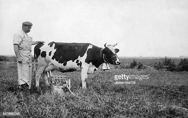Milchwirtschaft eine Kuh wird auf der Weide elektrisch gemolken undatiert vermutlich 1911 veröffentlicht Berliner Allg Zeitung 2161911 Berliner...