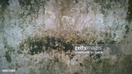 Mildew On Wall