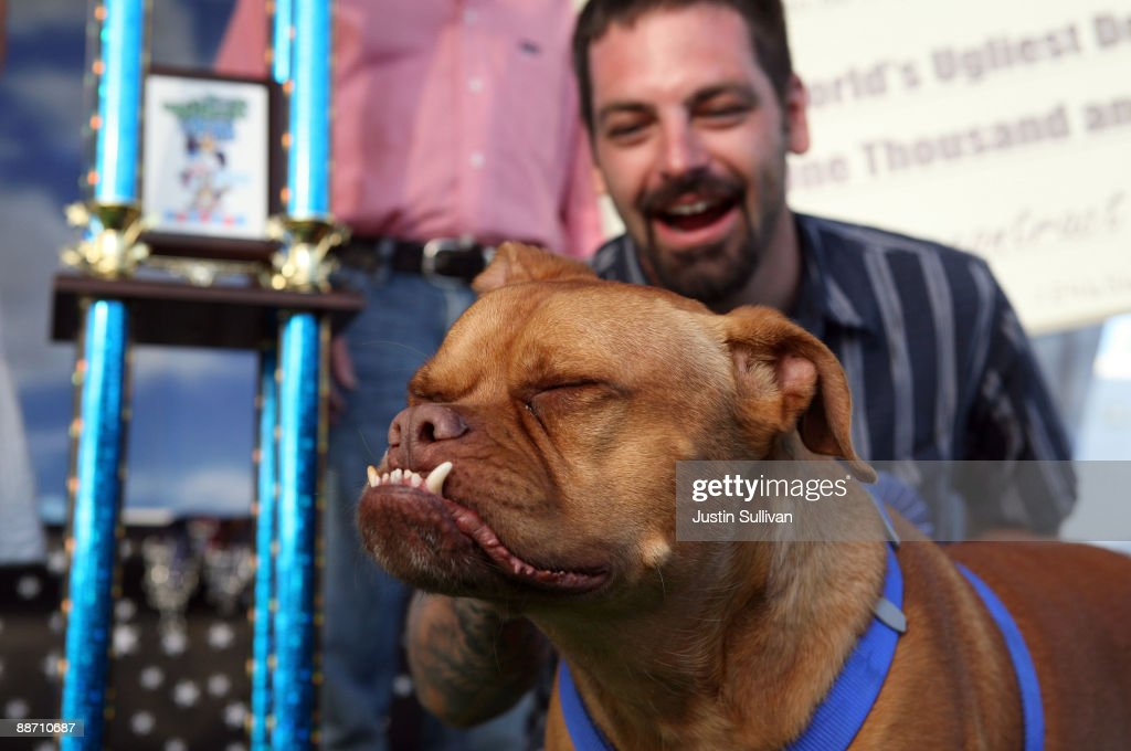 Miles Egstad of Citrus Heights, California, stands with his dog Pabst, a boxer mix, after winning the 21st Annual World's Ugliest Dog Contest at the Sonoma-Marin Fair June 26, 2009 in Petaluma, California. Pabst, a four year-old boxer mix won the annual World's Ugliest Dog contest.