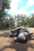 Miles Lappeman with the carcass of Longhorn a 24 yearold Rhino Cow at the Finfoot Lake Reserve on November 24 2012 in North West South Africa...