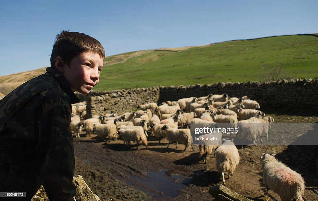 Miles Owen, 7, looks on as a delivery of sheep is made at Ravenseat, the farm of the Yorkshire Shepherdess Amanda Owen on April 15, 2014 near Kirkby Stephen, England. Amanda Owen runs a 2,000 acre working hill farm in Swaledale which is one of the remotest areas on the North Yorkshire Moors. Working to the rhythm of the seasons the farm has over 900 Swaledale sheep that are now entering the lambing season as well as cattle and horses.