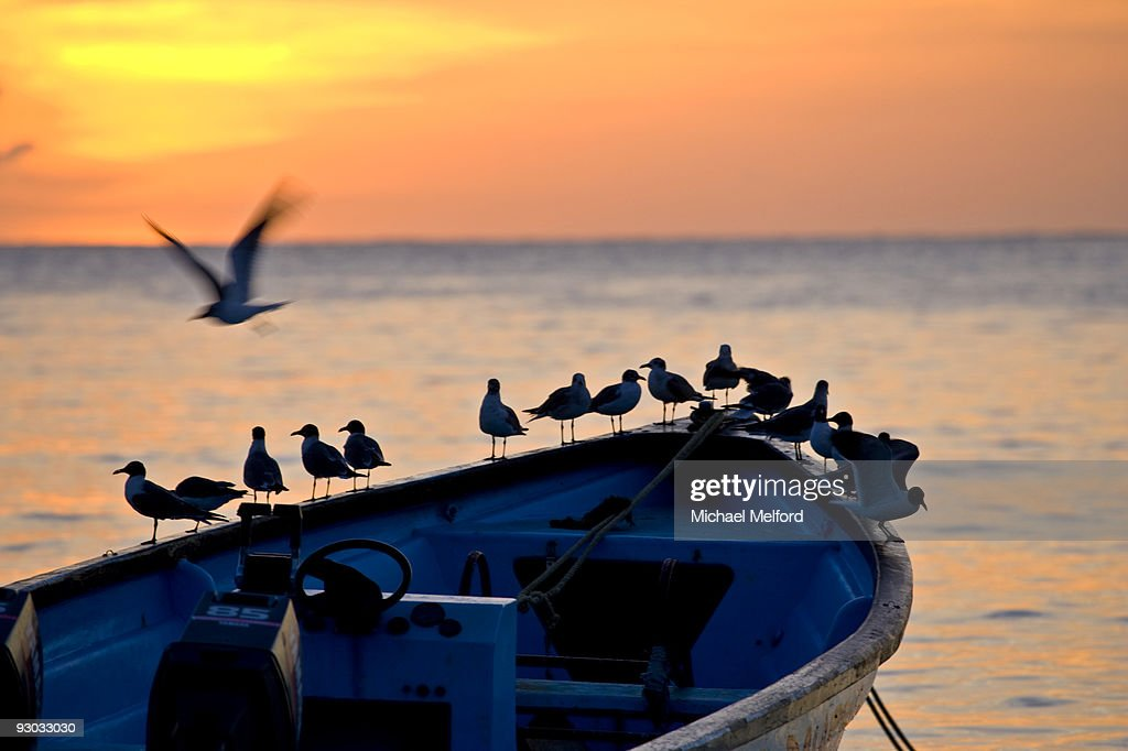 Birds standing on the bow of a wooden boat at sunset.