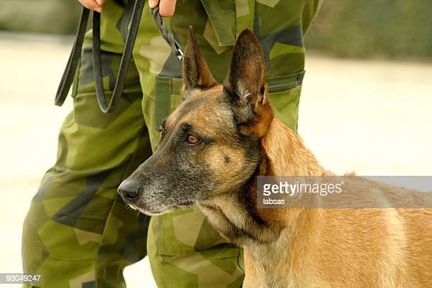 Militares de perro