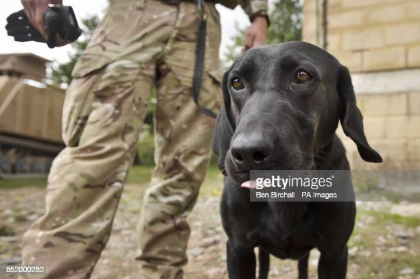 Military working dog Tonic the fiveyearold black Labrador and his handler Private Mark Kilgour 1 Military Working Dogs from Livingston chill out...