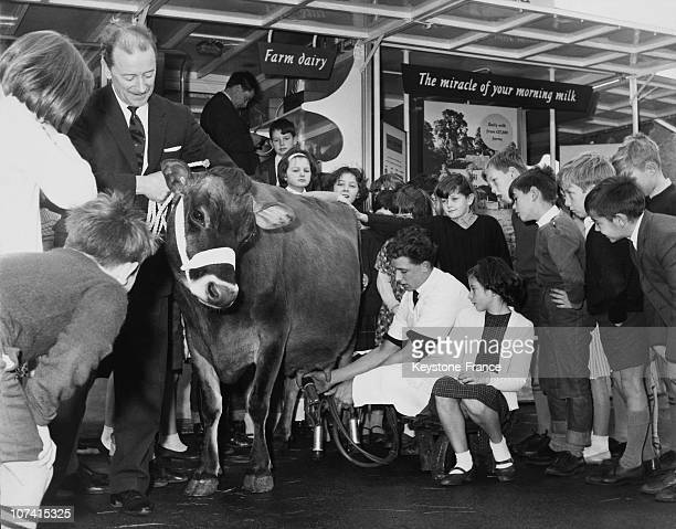 Milking Lesson In London On November 24Th 1964