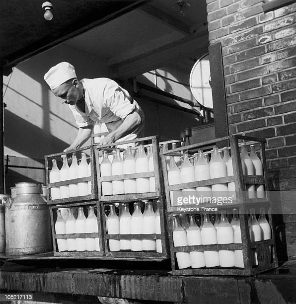Milkman In The Netherlands In 19461947
