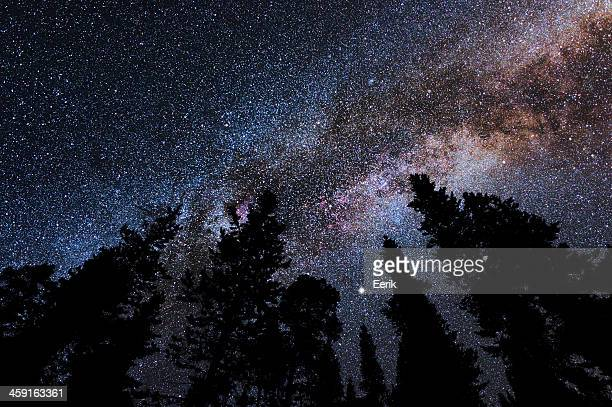 Milky Way above forest