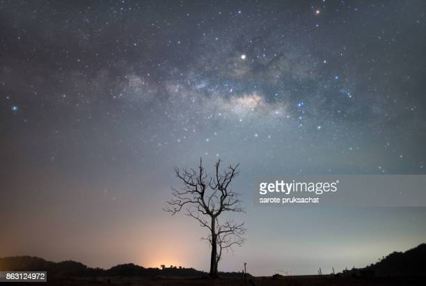 Milky way and death tree .