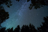 Milky way and stars above treetops