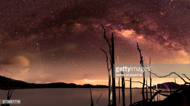 milky way galaxy and Perennial dead tree