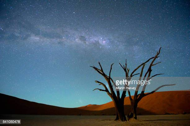 Milky Way over Dead Acacia Tree. Dead Vlei,Soussvlei,Namibia