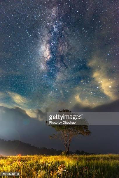 Milky way over the Tree at Khao Yai National Park