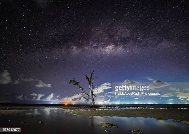 Milky way rising over a lonely tree in Sabah