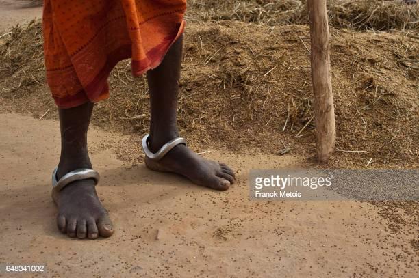 Millet harvest ( India)
