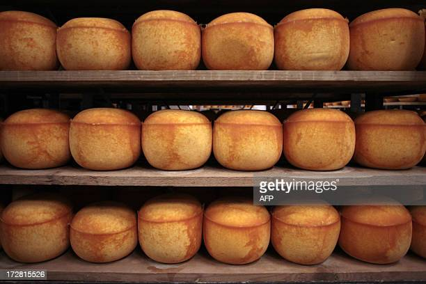 Mimolette cheese are pictured in a production site of the French Isigny Ste Mere company on July 4 2014 in IsignysurMere northwestern France After...