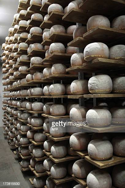 Mimolette cheese are pictured in a production site of the French Isigny Ste Mere company on July 4 2013 in IsignysurMere northwestern France After...