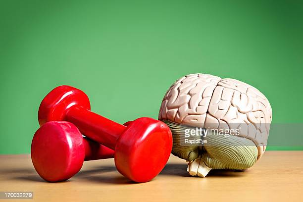 Mind and body working synergistically: model brain with barbells