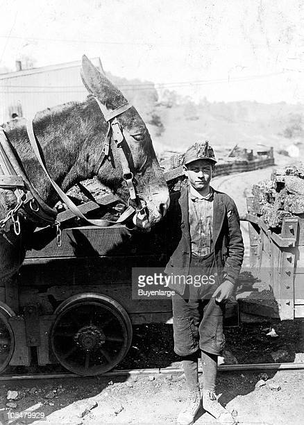 A miner boy of around twelve years of age with his mule Grafton West Virginia 1908