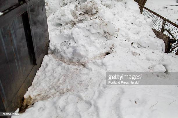 A mini highway of dirt covered trails created by rats dots the snow covered landscape behind a dumpster in the driveway of a Libbytown apartment...