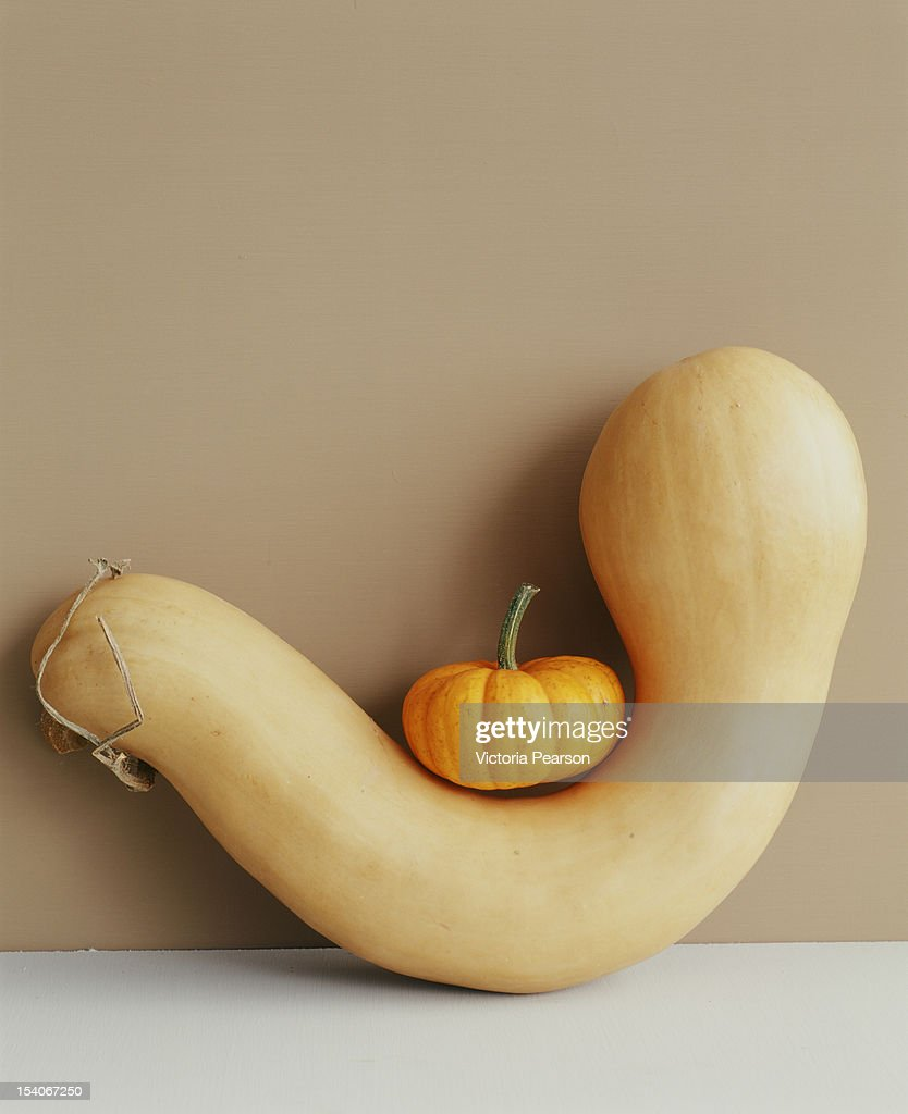 Mini pumpkin sitting on a gourd. : Stock Photo