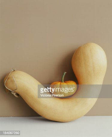 Mini pumpkin sitting on a gourd. : Bildbanksbilder