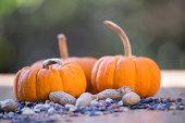 Mini pumpkins and some peanuts