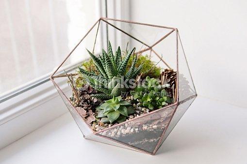 Mini Succulent Garden In Glass Terrarium Stock Photo Thinkstock