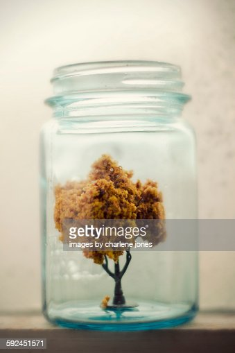 Miniature fall tree
